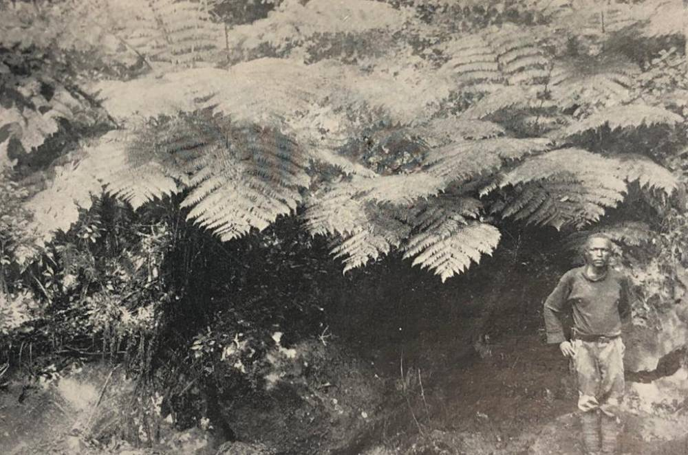 1926 - Johnathan Beside Fern Trees