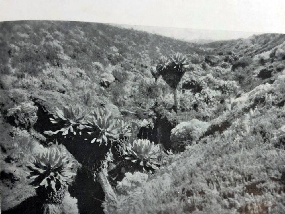 1926 - Alpine Rockery At The Equator